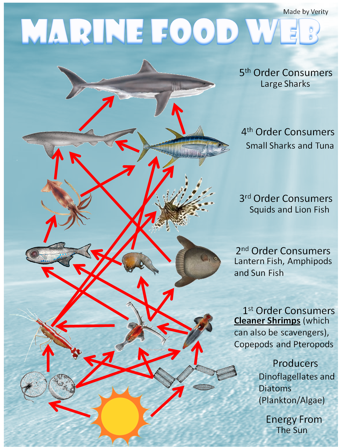 What Is A Marine Food Web